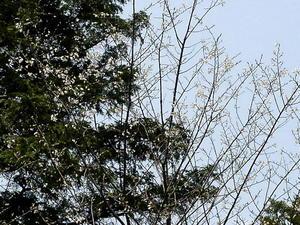 桜20040407