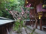 haru_hanadayori_h270331_03.jpg