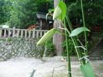 kasaburannka_0714_01.jpg
